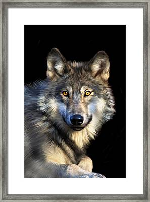 Jacob Framed Print by Julie L Hoddinott
