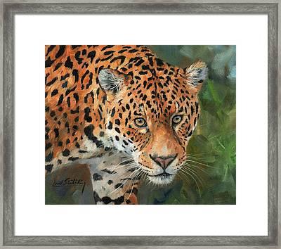 Jaguar Big Cat Framed Print by David Stribbling