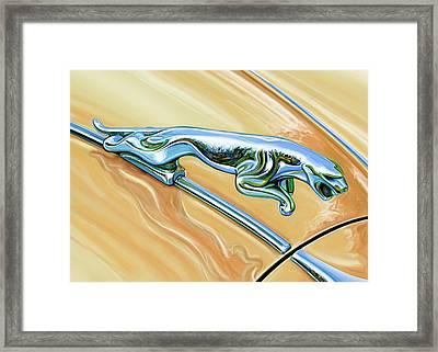 Jaguar Hood Cat Framed Print by David Kyte