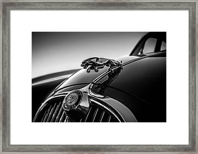 Jaguar Mascot Framed Print by Douglas Pittman