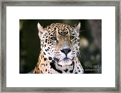 Jaguar Framed Print by Scott Pellegrin