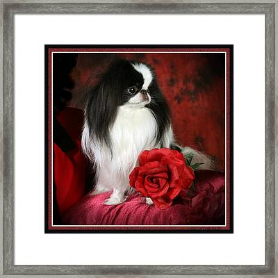 Japanese Chin And Rose Framed Print by Kathleen Sepulveda