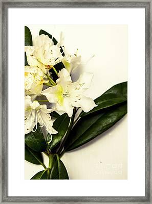 Japanese Flower Art Framed Print by Jorgo Photography - Wall Art Gallery