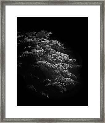 Japanese Maple Framed Print by Joseph Smith
