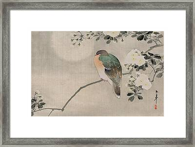 Japanese Silk Painting Of A Wood Pigeon Framed Print by Japanese School