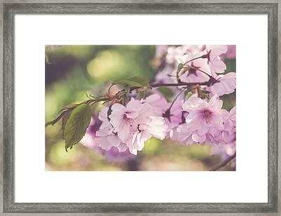 Japanese Tree In Bloom Framed Print by Cindy Grundsten