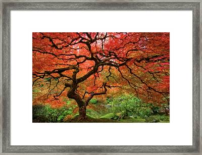 Japenese Garden, Portland Framed Print by Jesse Estes