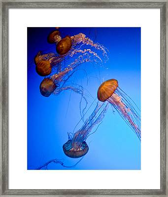 Jelly Fish Iv Framed Print by James Dricker