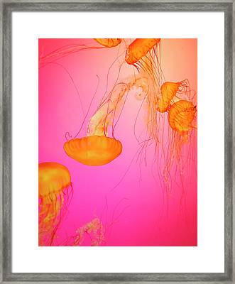 Jelly Fish Framed Print by Tricia S. Schumacher