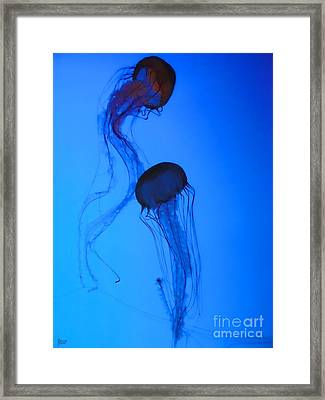 Jellyfish 5 Framed Print by Jeff Breiman