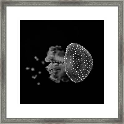 Jellyfish Framed Print by Joana Kruse