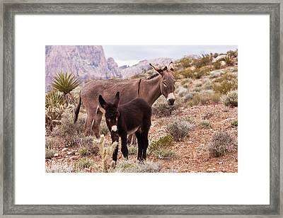 Jennys Foal Framed Print by James Marvin Phelps