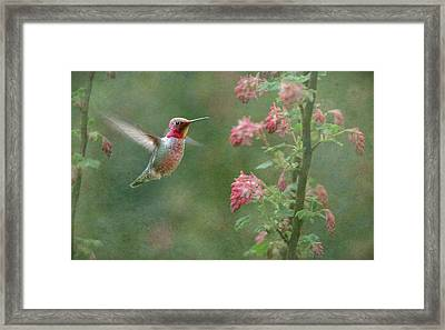Jewel In The Garden Framed Print by Angie Vogel