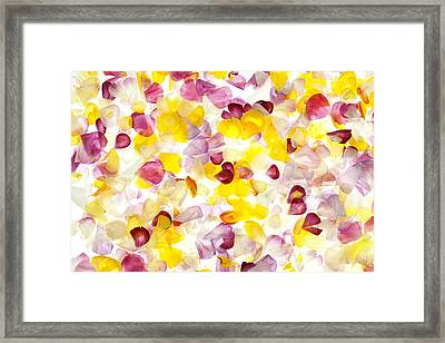 Jewel Like Petals Framed Print by Brad Rickerby