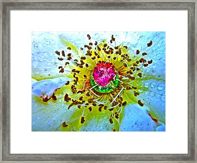 Jive Framed Print by Gwyn Newcombe