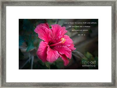Job 14 Framed Print by Robert Bales