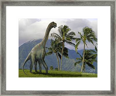 Jobaria In Meadow Framed Print by Frank Wilson