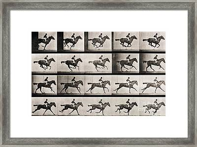 Jockey On A Galloping Horse Framed Print by Eadweard Muybridge
