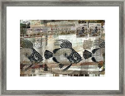 John Dory Fish Postcard Framed Print by Carol Leigh