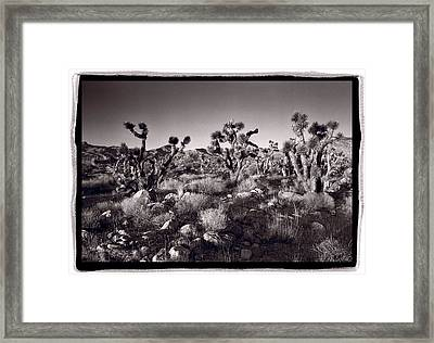 Joshua Tree Forest St George Utah Framed Print by Steve Gadomski