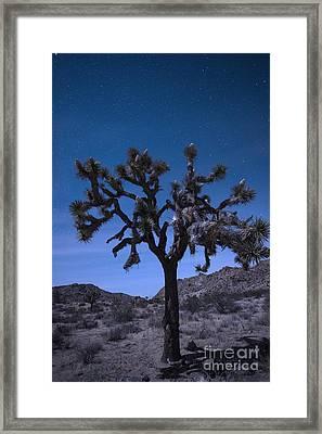 Joshua Tree Framed Print by Juli Scalzi