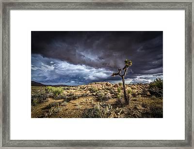 Joshua Tree Light Framed Print by Peter Tellone