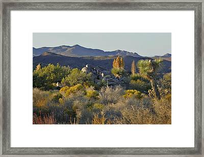 Joshua Tree National Park In California Framed Print by Christine Till