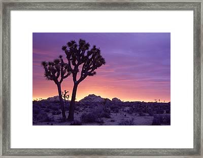 Joshua Tree Sunrise Framed Print by Eric Foltz