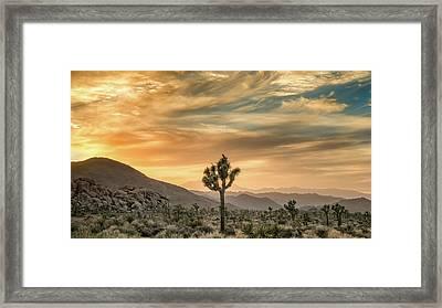 Joshua Tree Sunrise Framed Print by Joseph Smith