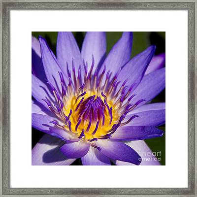 Journey Into The Heart Of Love Framed Print by Sharon Mau