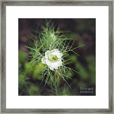 Joy In The Morning Framed Print by Sharon McConnell