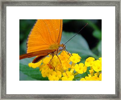 Julia Framed Print by Peggy King