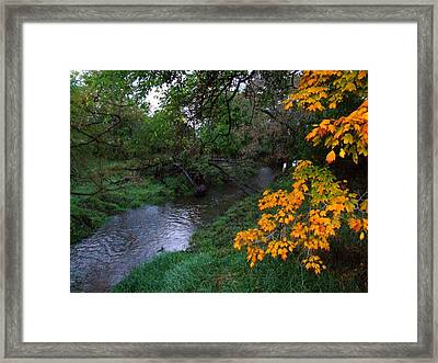 July Fall Framed Print by Michael L Kimble
