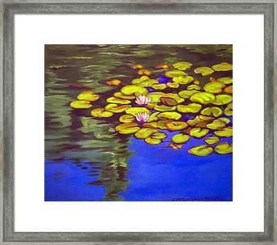 July Waterlilies Framed Print by Clayton Singleton