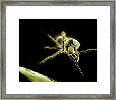 Jumping Spider, Computer Artwork Framed Print by Ian Cuming