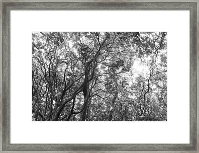 Jungle Canopy Framed Print by Les Cunliffe