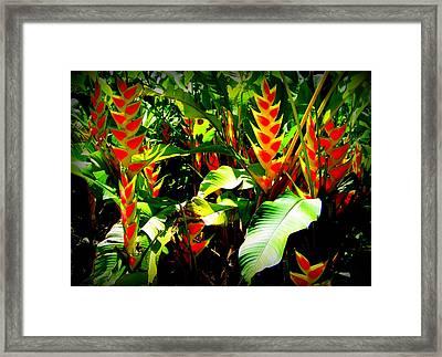 Jungle Fever Framed Print by Karen Wiles