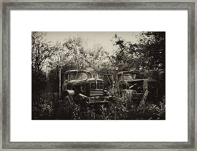 Junkyard Dogs IIi Framed Print by Off The Beaten Path Photography - Andrew Alexander