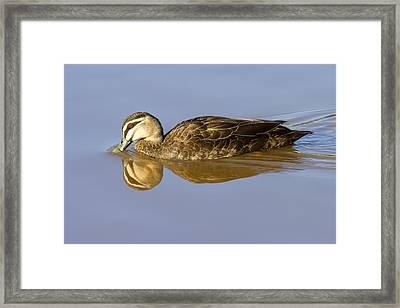 Just A Sip Framed Print by Mike  Dawson