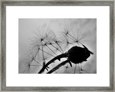 Just Another Shot In The Back Framed Print by Wendy Rickwalt