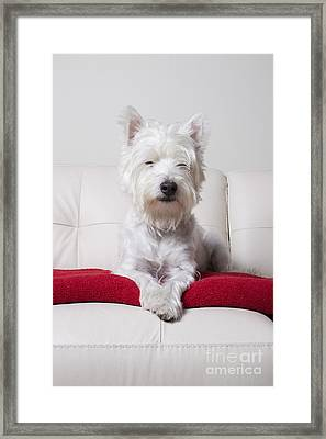 Just Chilling Framed Print by Edward Fielding