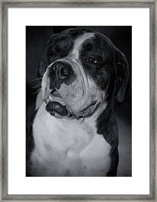 Just Handsome II Framed Print by DigiArt Diaries by Vicky B Fuller