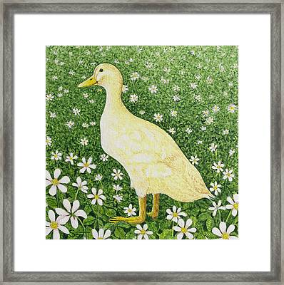 Just Looking Framed Print by Pat Scott