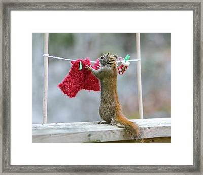 Just Need One More Clothespin Framed Print by Nancy Rose