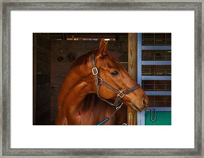 Just Waiting For My Turn To Race Framed Print by Robert L Jackson