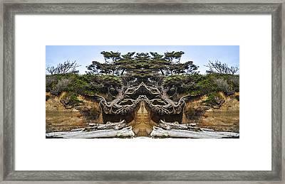 Meditating Tree Framed Print by Pelo Blanco Photo