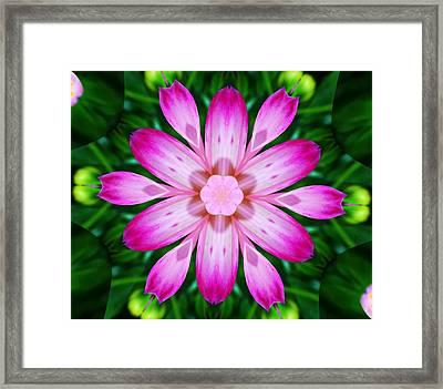 Kaleidoscope Of A Dahlia Framed Print by Cathie Tyler