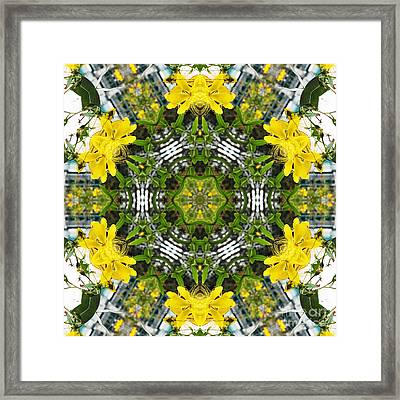 Kaleidoscope Of Showy St Johns Wort Framed Print by Wendy Townrow