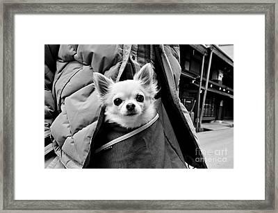 Kangaroo Dreams Framed Print by Dean Harte