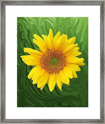 Kansas Sunflower Framed Print by Jim  Darnall